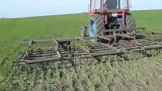 Выращивание органической пшеницы. Часть 1.(Growing organic wheat. Part 1.)