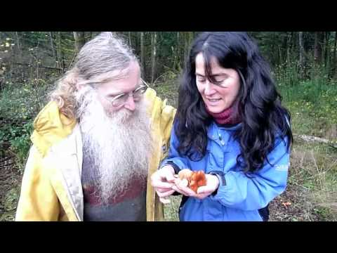 Paul Stamets finds Lactarius fragilis w  Dusty Yao and Richard Gaines