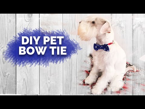 DIY PET BOW TIE | DOG BOW TIE OVER THE COLLAR TUTORIAL