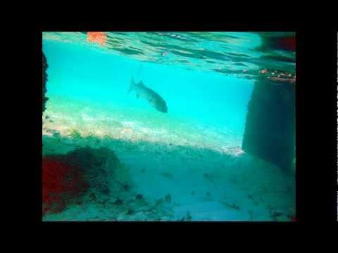 STINGRAY SAND BAR CAYMAN ISLANDS & SNORKELING TRIP
