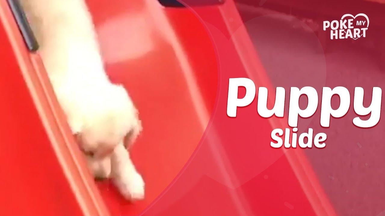 Puppy Plays On Slide
