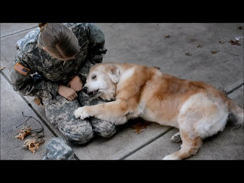 Soldiers Coming Home to Doggos