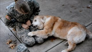 SOLDIERS COME HOME TO DOGS COMPILATION