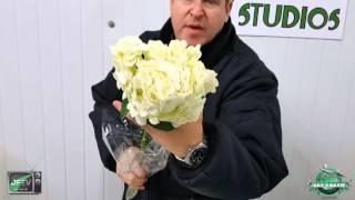 JFTV: Flores Del Este Fancy Grade Colombian Hydrangea
