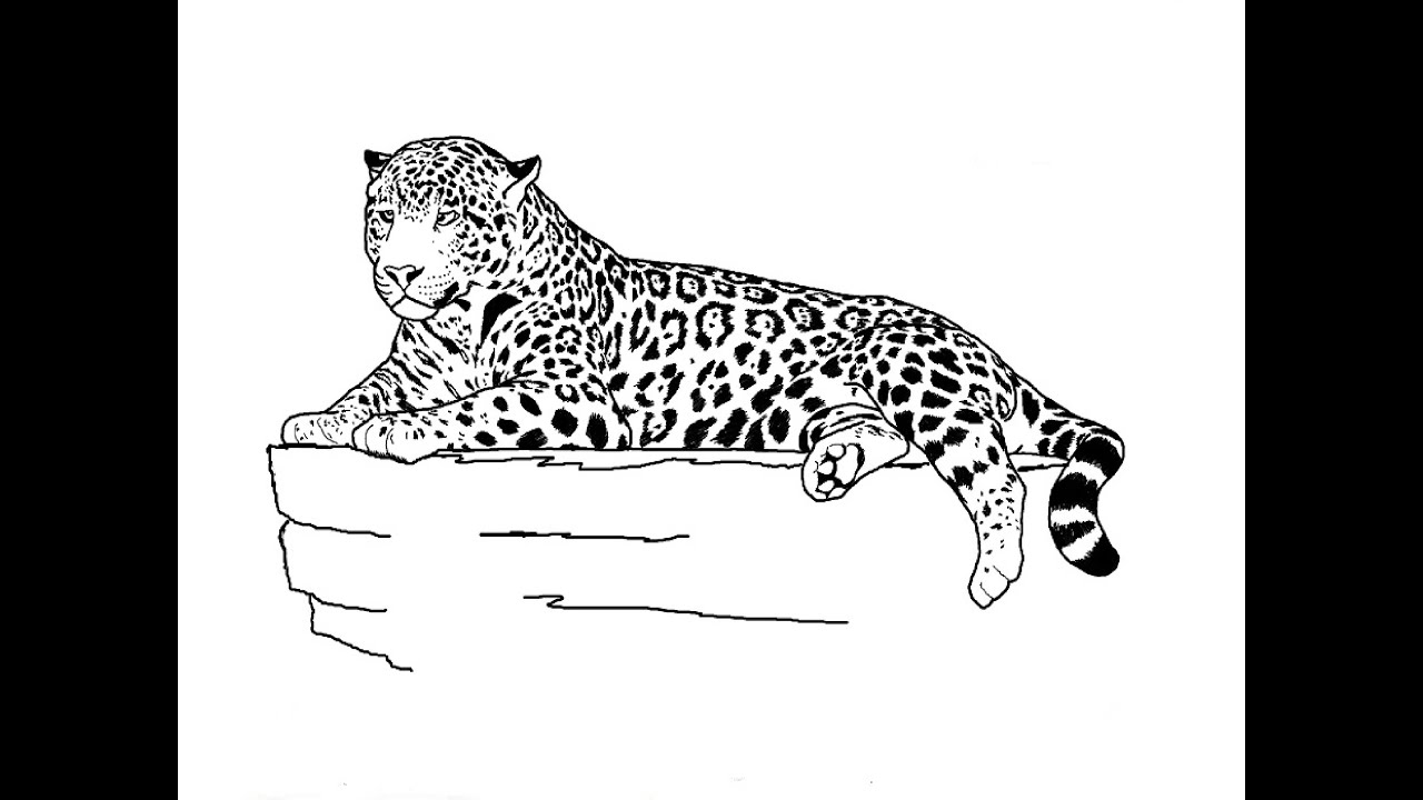 Drawing Of A White Jaguar Pictures To Pin
