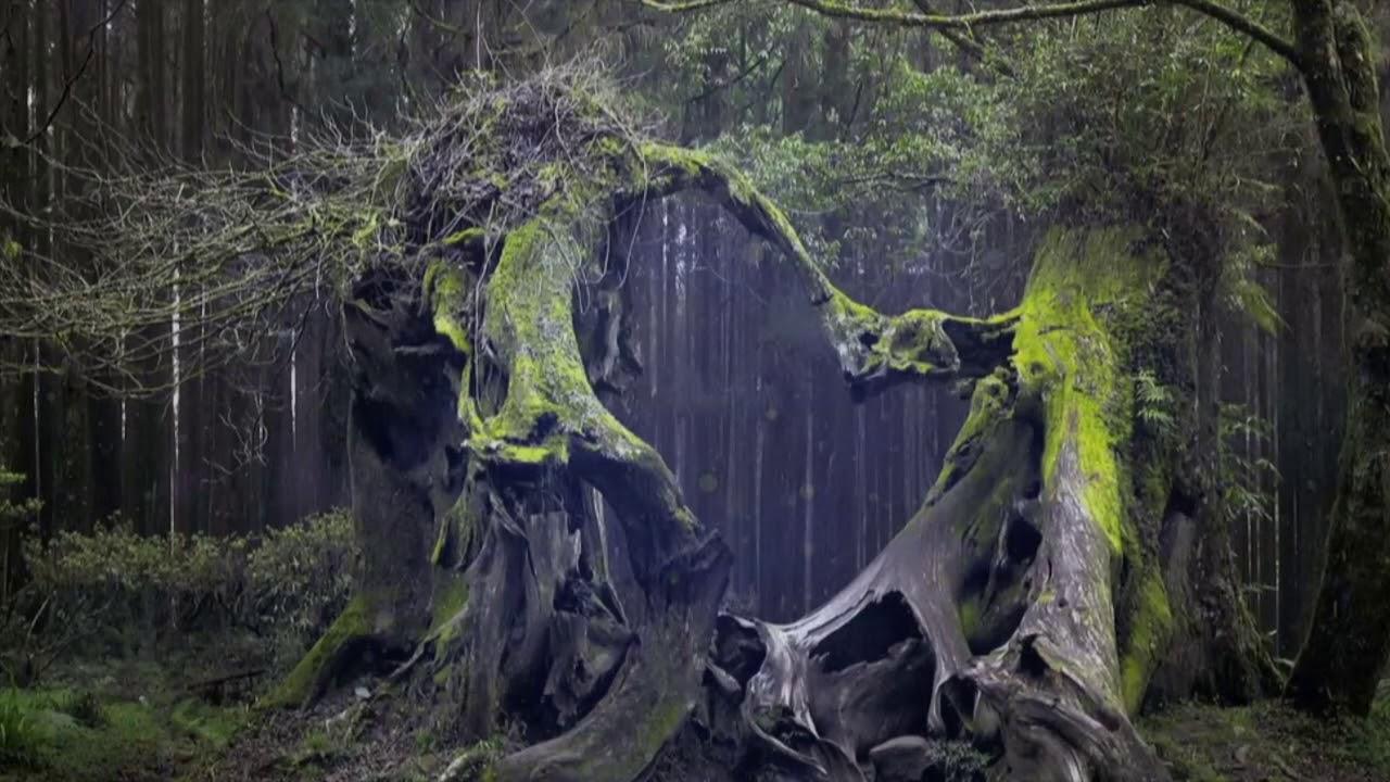 Poarta spre iad din Padurea Botosani