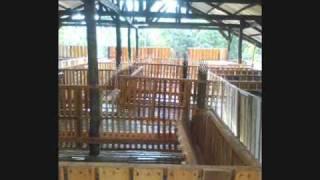 Goat Housing Golden Farm