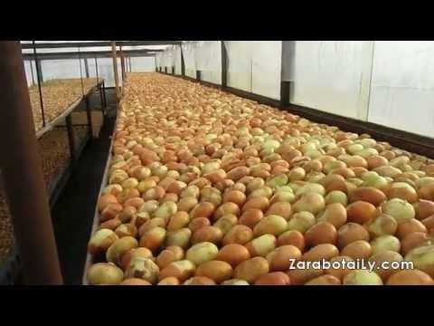 Гидропонная установка для выращивания клубники своими руками
