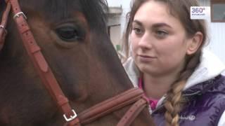 Забежавший на детскую площадку конь стал яблоком раздора для коневладельцев