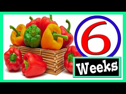 How To Keep Bell Peppers Fresh