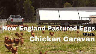 New England Pastured Eggs With A Chicken Caravan