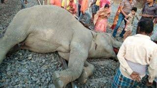 Animal that hit by train very sad 😢😥