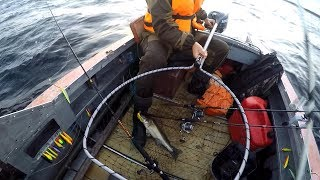 Рыбалка на Ладоге | Ловля судака на троллинг