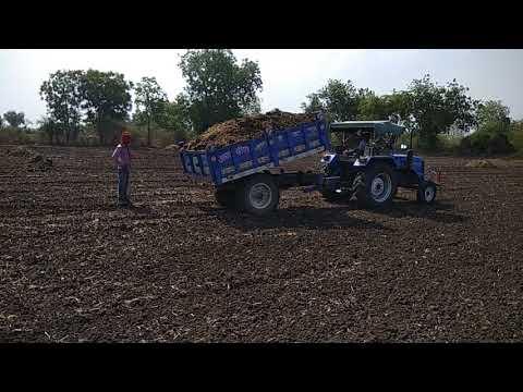 moringa leaves farming in india organic B-kisan kisan pathshala Balram jat 9424538222
