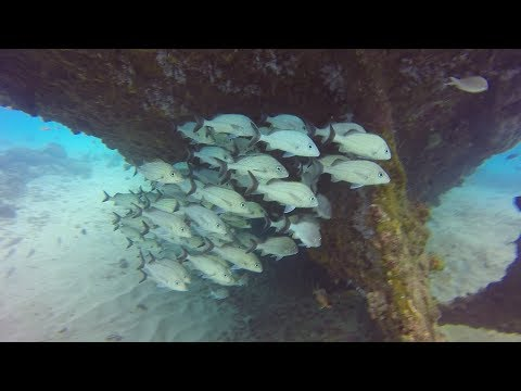 Scuba Diving on the Six Shipwrecks in Carlisle Bay, Barbados