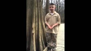 Bald Cypress Trees & Knees