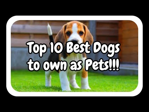 Top 10 Best Pet Dogs