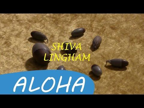 SHIVA LINGAM • Rob