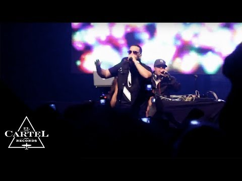 DADDY YANKEE @ AMSTERDAM EUROPE TOUR 2012 (Live)