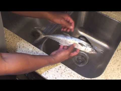 How To Clean A Mackerel (Fish Without Scales)