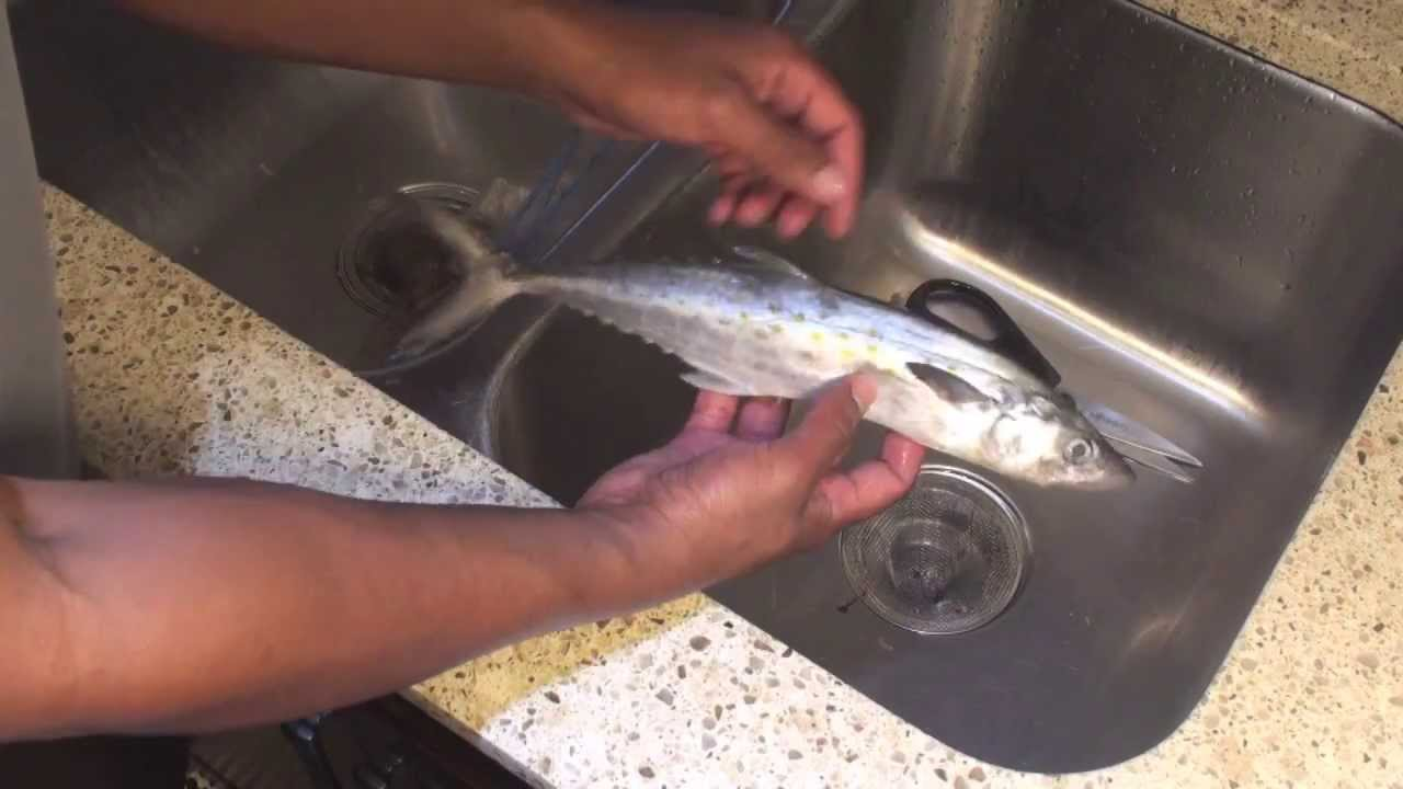 how to clean a mackerel fish without scales youtube