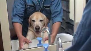 帰宅後の手洗い足洗いに笑顔が止まらないワンちゃん