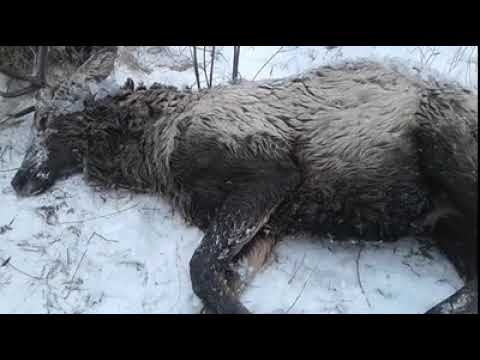 Rescatan de unas gélidas aguas a un ciervo