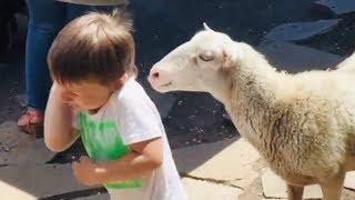 Киевский зоопарк, Артём кормит животных / смешное видео для детей