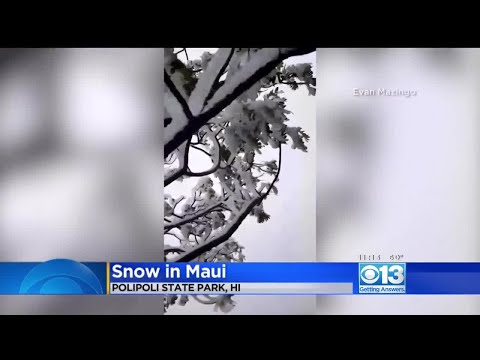 Patrick Sanders - Snow On Trees In Maui, Hawaii Lowest Elevation For Snow Ever Recorded There