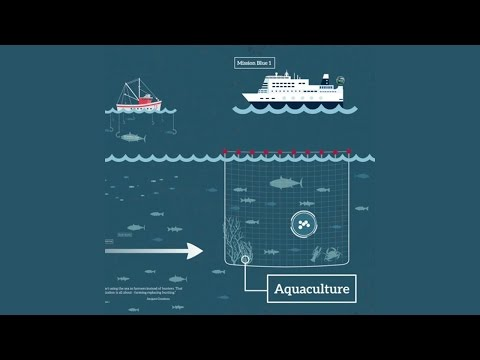 Antigua Sustainable Aquaculture - The case for fish farming  - Mike Velings
