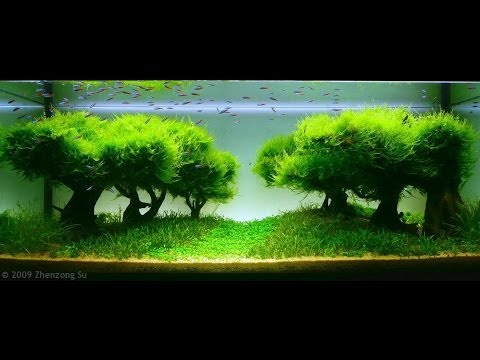 Best World Aquascape - Underwater Landscapes - Awesome ...