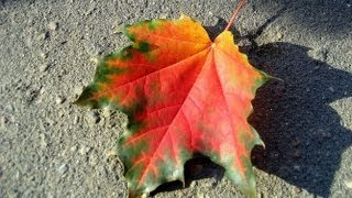Осенний дизайн ногтей: осенние листья: Соколова Светлана