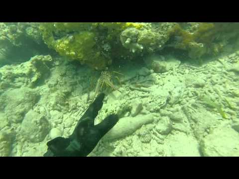 Great Dive off Pigeon Point, Falmouth, Antigua & Barbuda