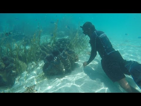 Giant Clam Sanctuary in Samal Island (Taklobo Tours)