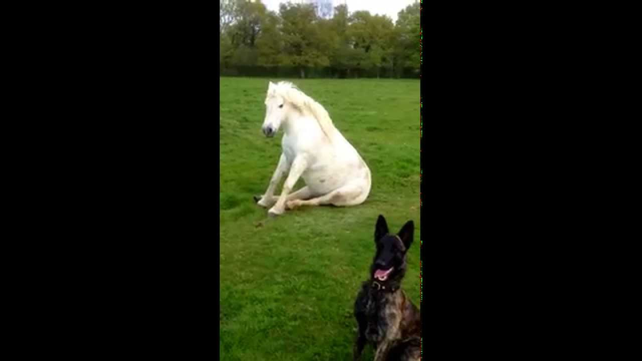 Teaching A Horse To Sit Like A Dog