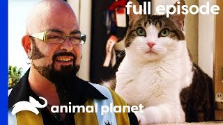 Cat and Dog at War Learn To Get Along | My Cat From Hell (Full Episode)