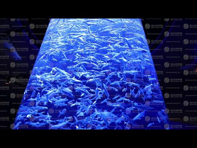 Sea sardine colony in ocean.at theme park