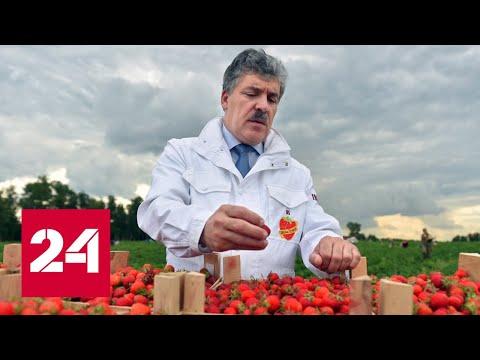 """Проигрыш """"клубничного короля"""": Грудинин не сберег активы - Россия 24"""