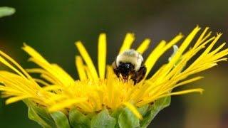 Пчеловодство для начинающих. Самые просты советы
