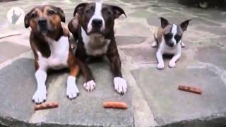 Собаки и сосиски
