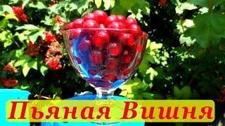 Пьяная вишня, рецепт приготовления.(http://alkofan.org - рецепты алкоголя и закусок от алкофана Подписывайтесь http://www.youtube.com/user/alkofan1984?sub_confirmation=1 Вконтакт..., 2013-07-26T20:40:19.000Z)