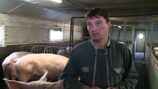 Les éleveurs de porc menacés par le dépôt de bilan