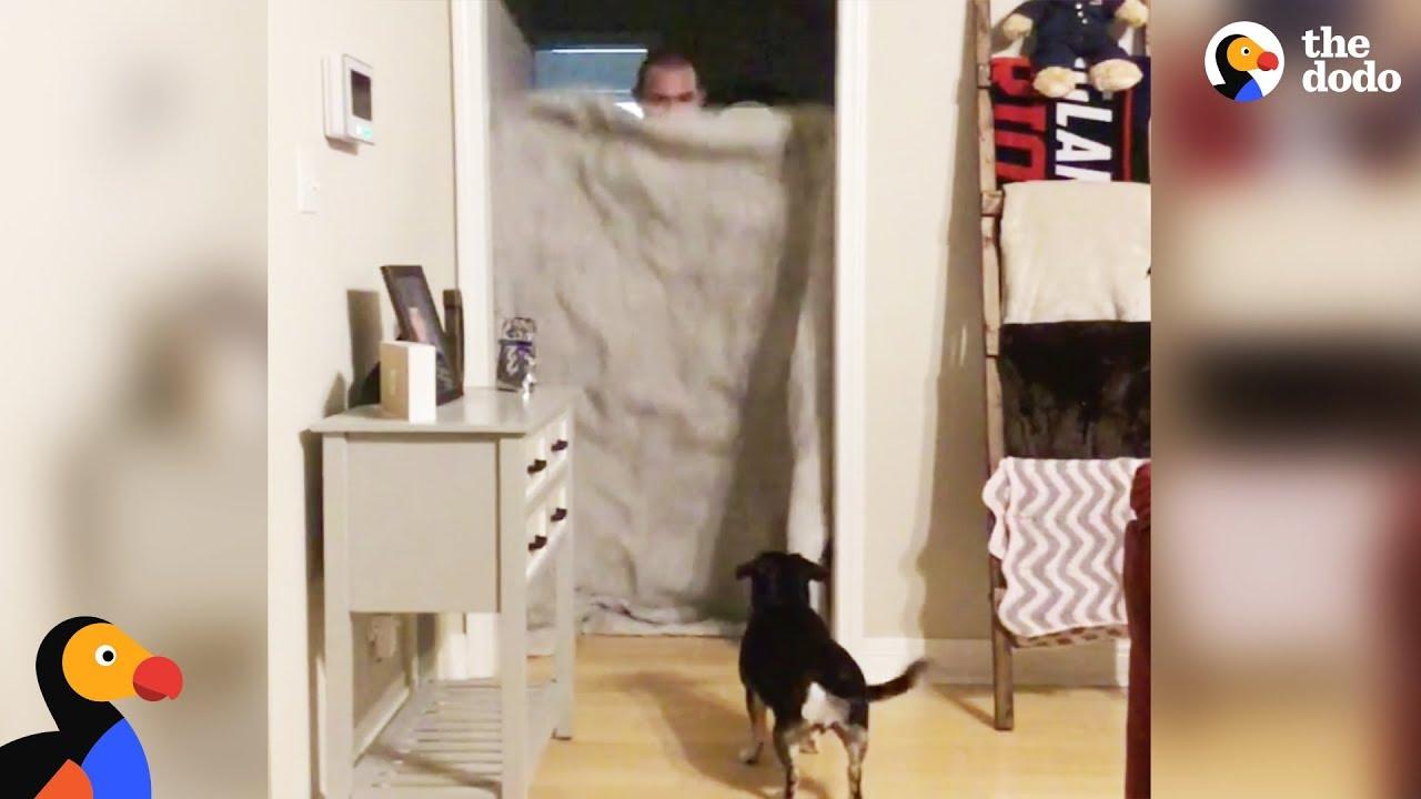 Dog Reunited with Soldier Dad During What The Fluff Challenge | The Dodo