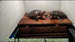 Как сделать бережок для красноухих черепах своими руками. Лучший способ.