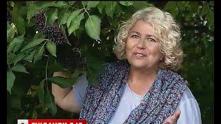 Наталя Підлісна поділилася секретами використання бузини