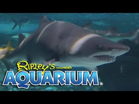 Ripley's Aquarium Of Myrtle Beach Tour & Review With The Legend