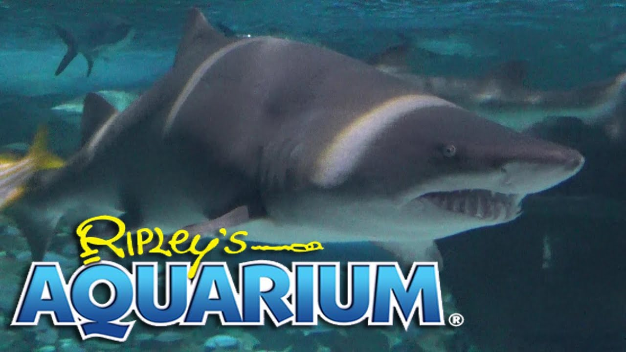 Aquarium Of Myrtle Beach Tour