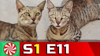 Funny Cat Videos for Kids | S1-EP11 | Cat Escape || Capture Candy Kids TV
