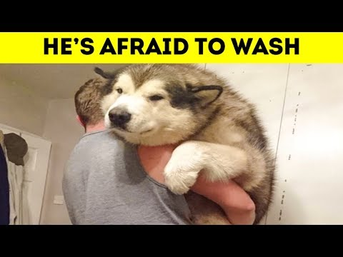 Photos Showing That Dogs Are All Still Puppies On The Inside 「 funny photos 」