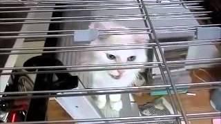 猫 多臓器不全.